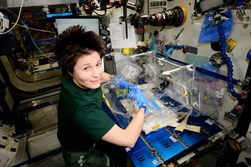Samantha Cristoforetti lavora all'esperimento Fruit Fly Lab con i moscerini della frutta. Credit: ESA/NASA