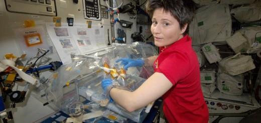 Samantha Cristoforetti lavora all'esperimento Osteo-4 in una scatola a guanti. Credit: ESA/NASA
