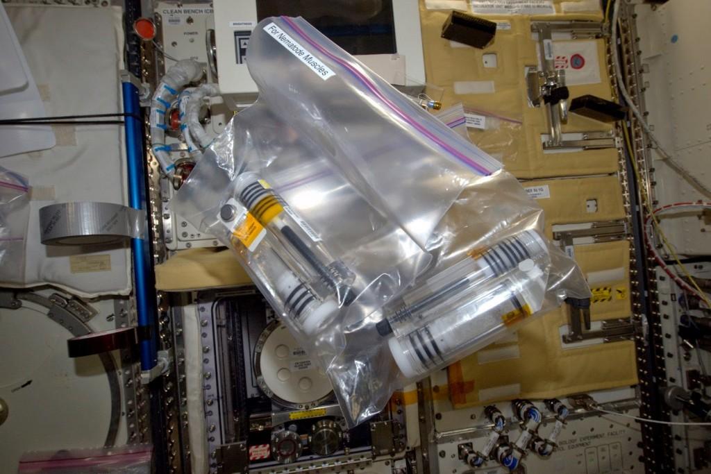 Le provette di fissaggio con le colture di C. Elagans pronte per la conservazione al freddo per l'esperimento Nematode Muscle della Expedition 43. Credit: ESA/NASA
