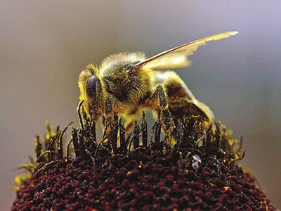 Potenziale utilizzo come polline © NASA / Veronica Remondini