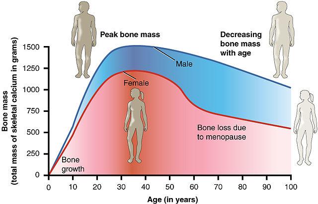 Schema dell'evoluzione della quantità di calcio nelle ossa.